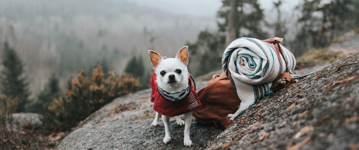 Дрессировка собаки цвергшнауцера валера яковлев